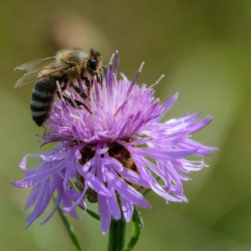 Hunger der Bienen 1