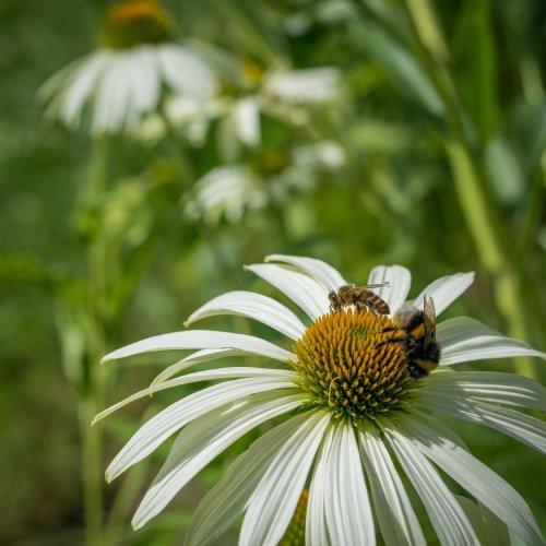 Hunger der Bienen 10-8150