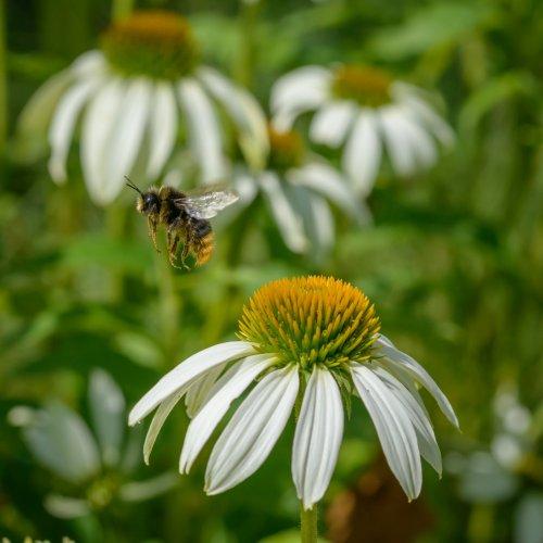 Hunger der Bienen 11-8156
