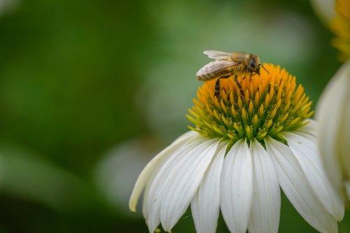 Hunger der Bienen 7