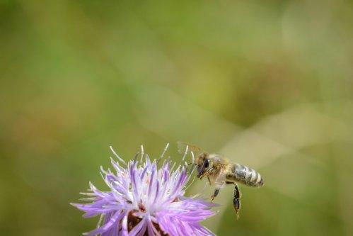Hunger der Bienen 8-8048