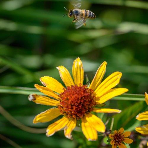 Hunger der Bienen 9-8098